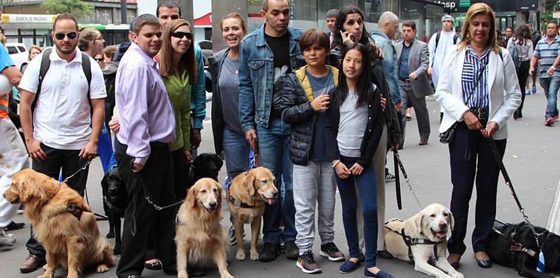 Imagem Dia Internacional do Cão-Guia